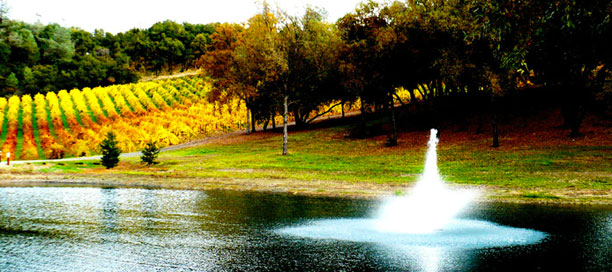 David Girard Vineyards