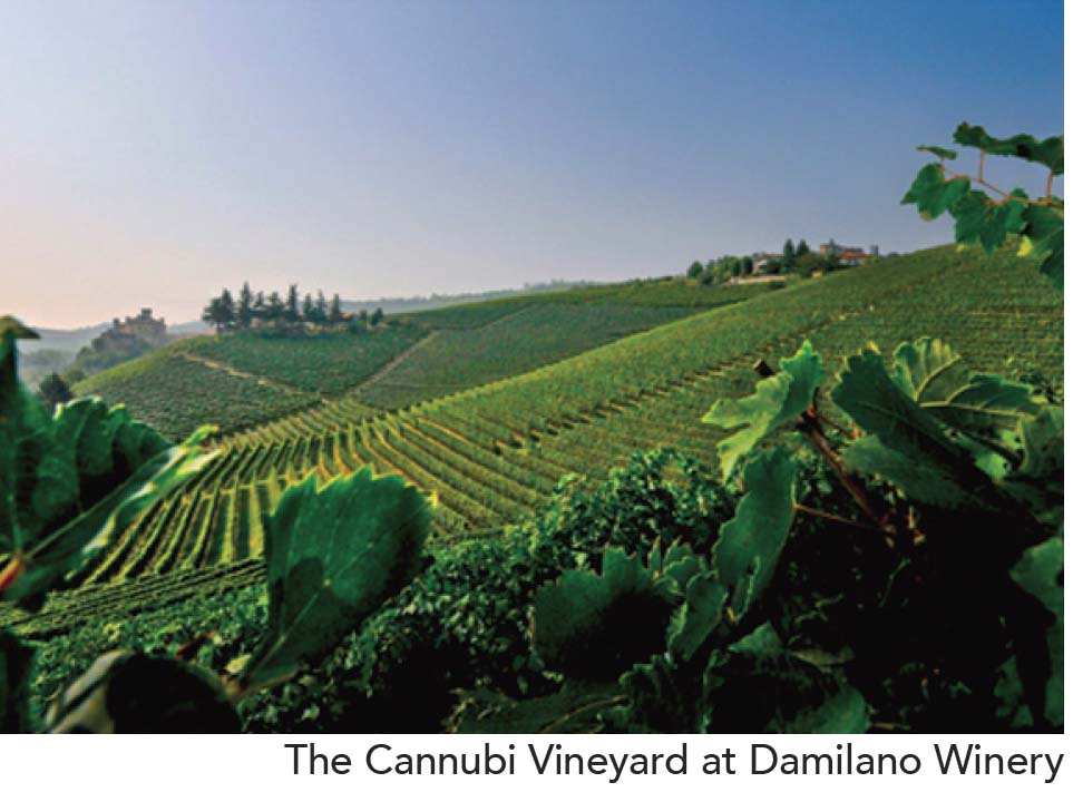Damilano Vineyard