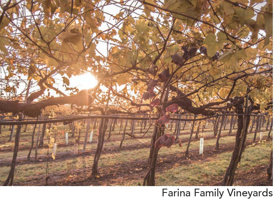Farina Family Vineyards
