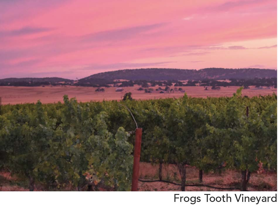 Frogs Tooth Vineyard