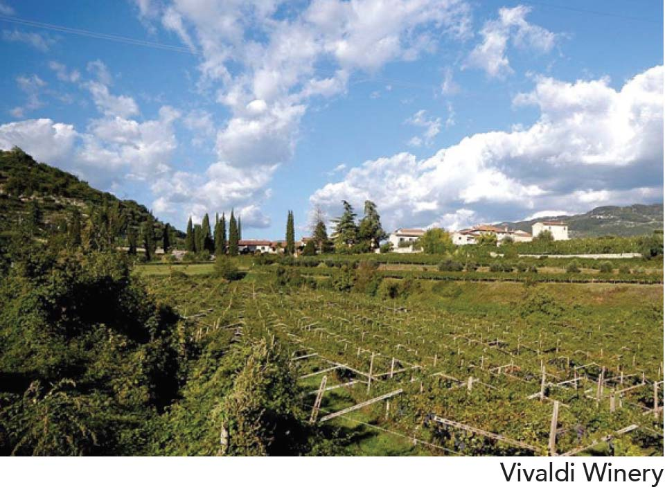 Vivaldi Winery